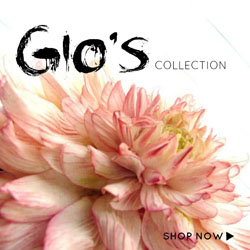 Gio's Collection - SUGAR ART STUDIO